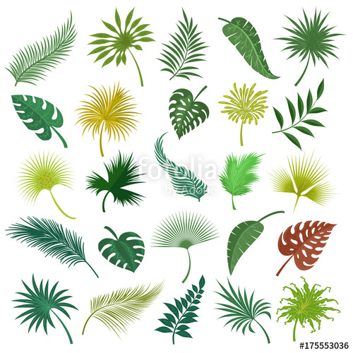 500x500 Illustrated Palm Exotic Green Leaves Isolated On White Background