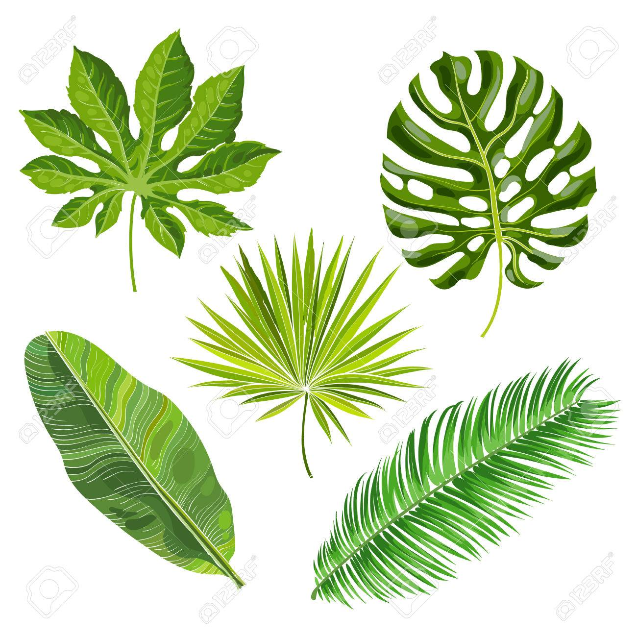 1300x1300 Set Of Tropical Palm Leaves, Vector Illustration Isolated