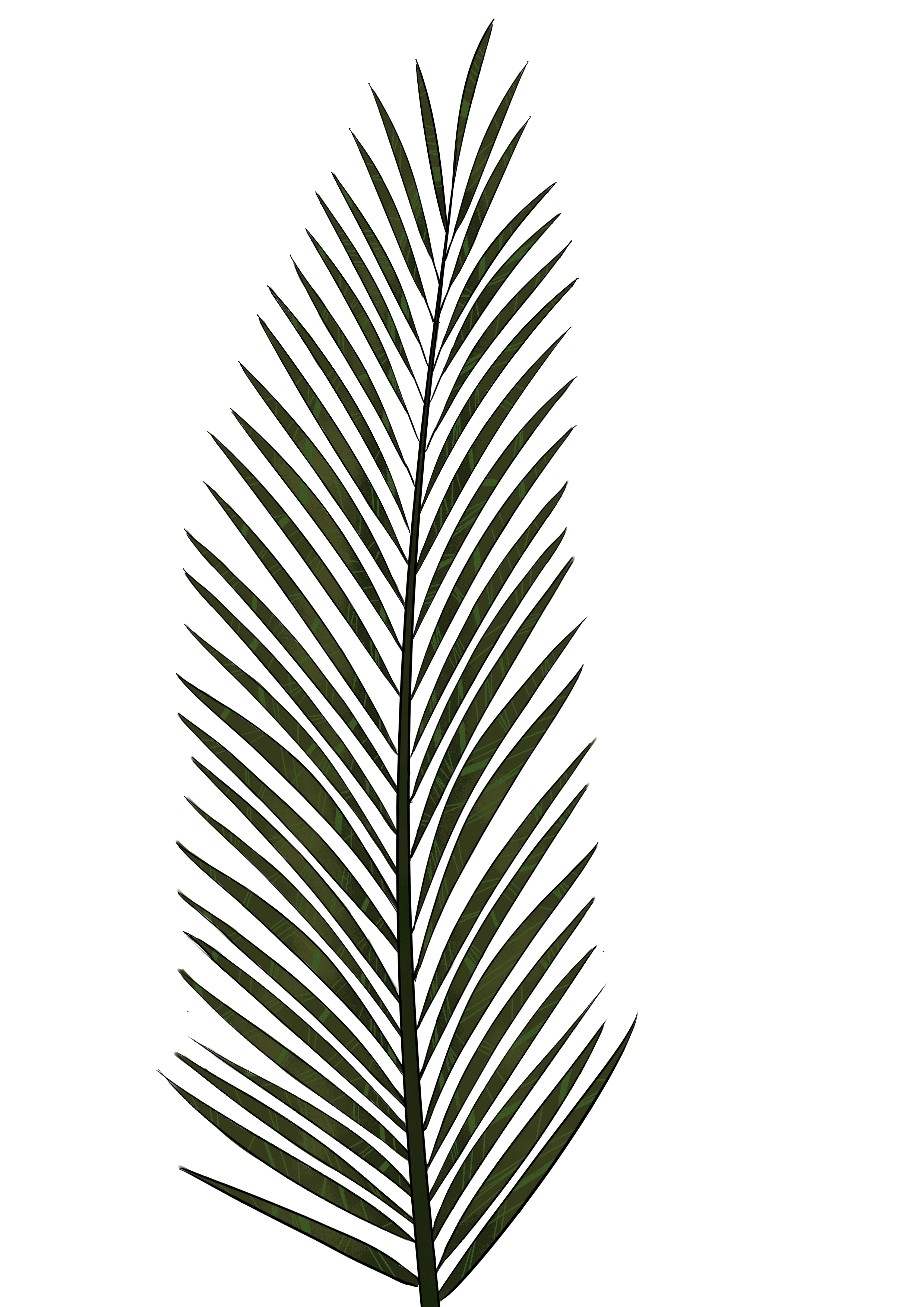 2480x3507 Cp Paurb Palm Leaf Png Textures And Style Radin Mas