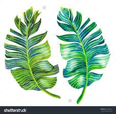 227x222 Image Result For Palm Leaf Drawing Its A Jungle Out There
