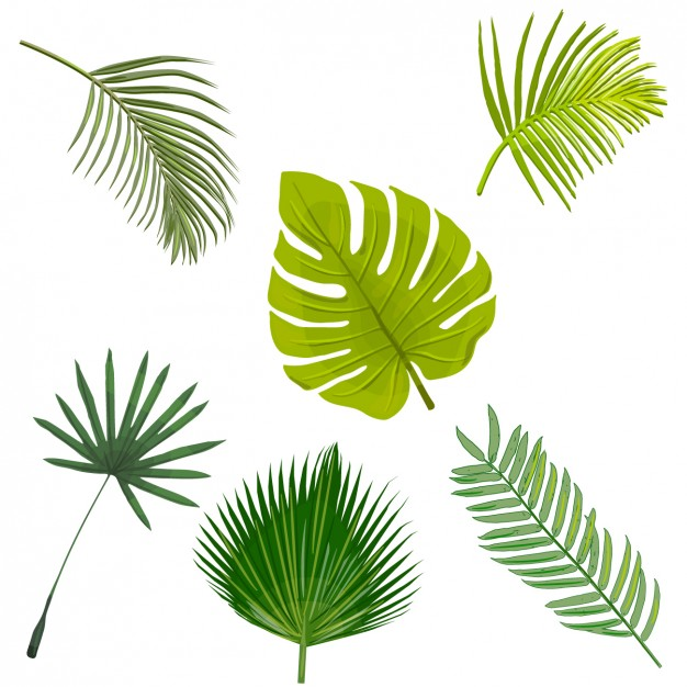626x626 Palm Tree Leaves Collection Vector Free Download
