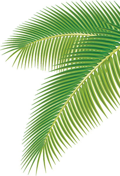 410x600 Set Of Green Palm Leaves Vector Free Vector In Adobe Illustrator