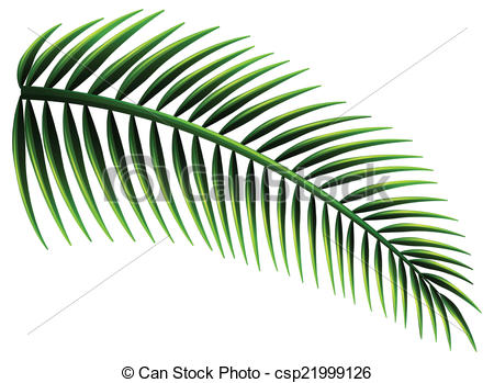 450x349 Illustration Of The Palm Leaves On A White Background Vector