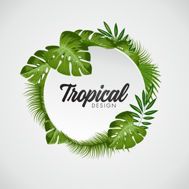 626x626 Palm Leaf Vectors, Photos And Psd Files Free Download