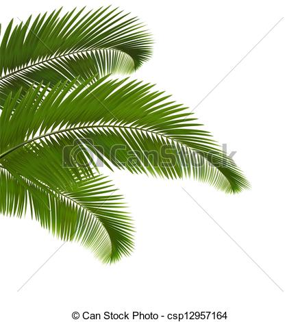 438x470 Palm Leaves On White Background. Vector Illustration. Clip Art