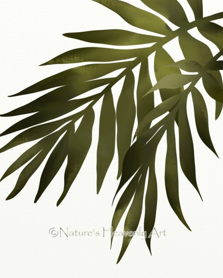 736x920 Palm Frond Drawing