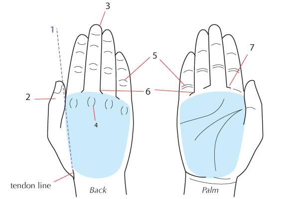 600x400 Human Anatomy Fundamentals How To Draw Hands