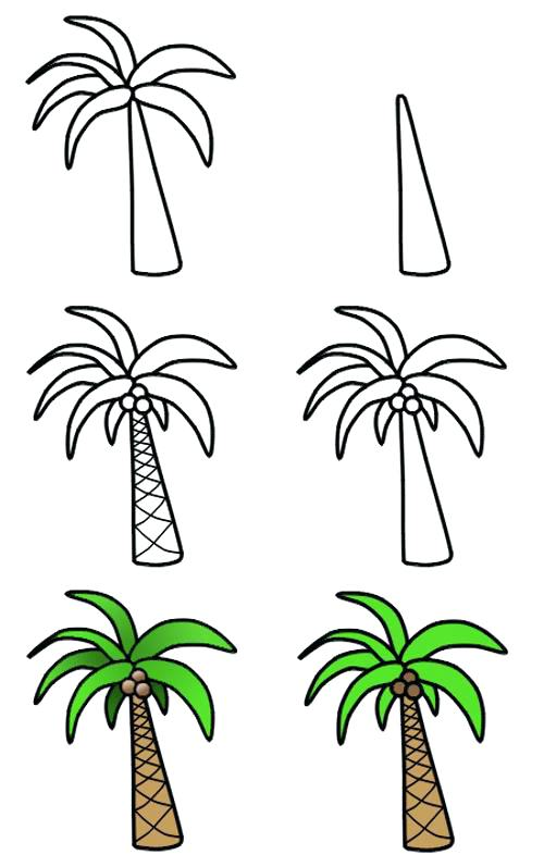 500x797 Drawing A Palm Tree Palm Trees Drawing Set Drawing A Palm Tree