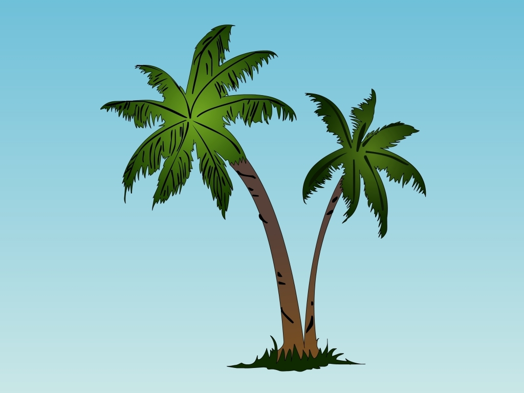 1024x768 Drawing Of Palm Tree Palm Trees Drawing
