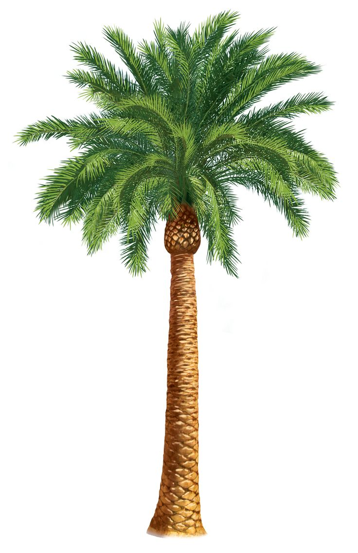 Palm Tree Drawing at GetDrawings.com | Free for personal use Palm ...