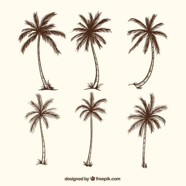 626x626 Sketches Of Palm Trees Vector Free Download