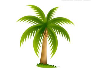 300x240 Palm Tree Free Images