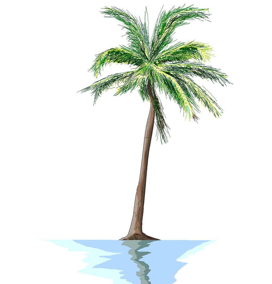 900x939 Palm Tree Drawing Png