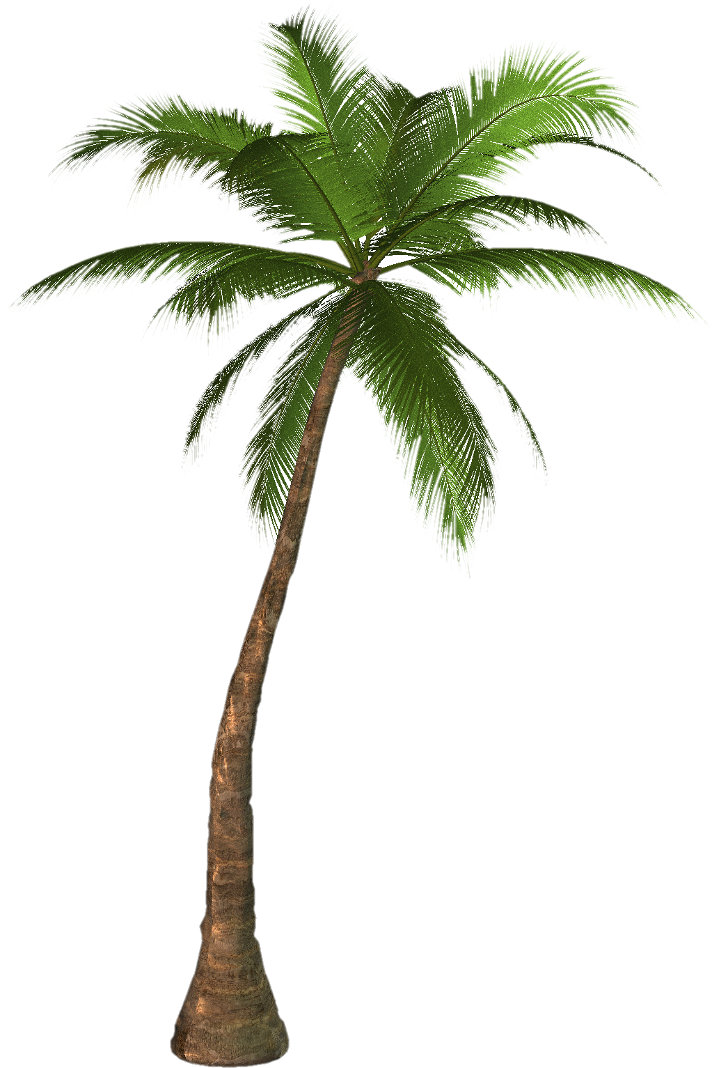 Palm Tree Drawing Png at GetDrawings.com | Free for personal use ...