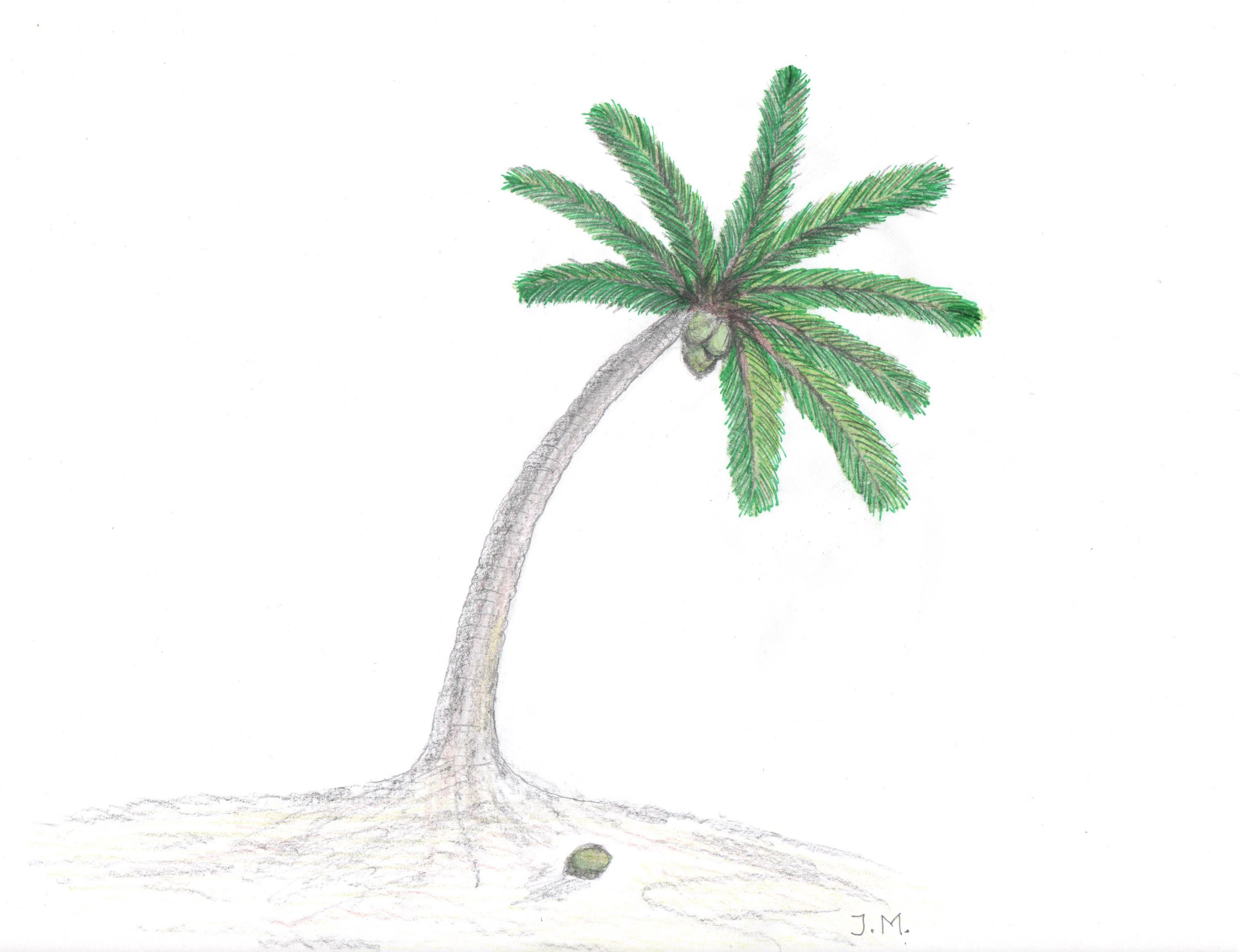 3000x2301 Coconut Tree Drawing How To Draw Simple Coconut Tree