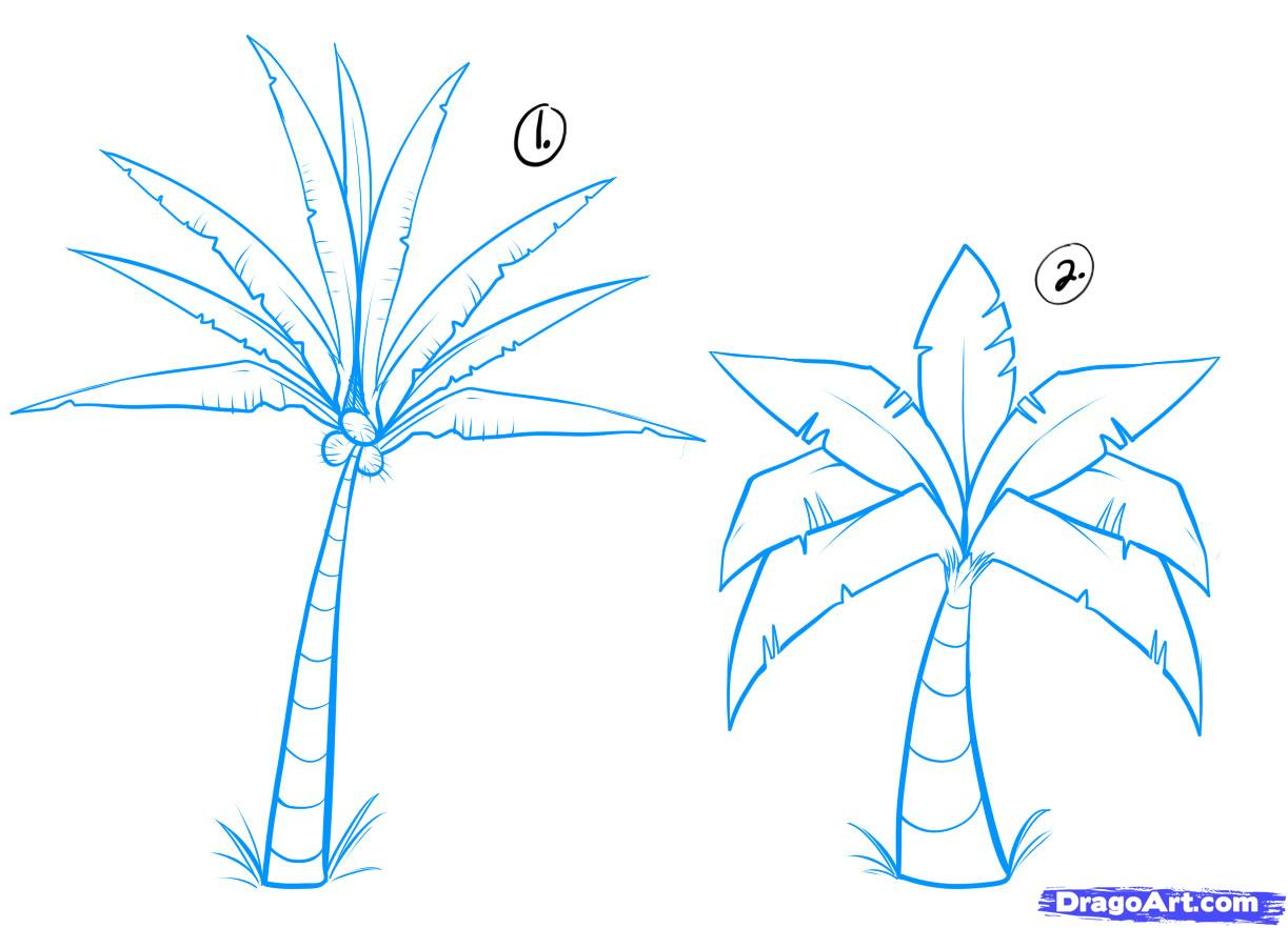 1223x882 Palm Tree Drawing Steps How To Draw Palm Trees, Stepstep, Trees
