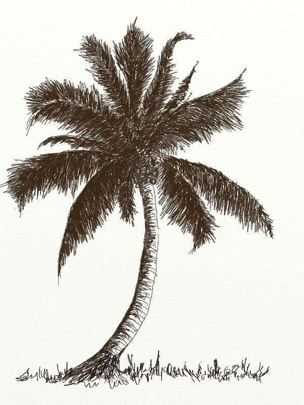 600x800 Learn How To Draw Coconut Tree With Pencil Step By Step Tutorial