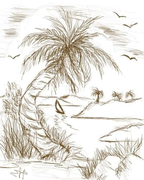 500x625 Palm Tree Drawing Tutorial