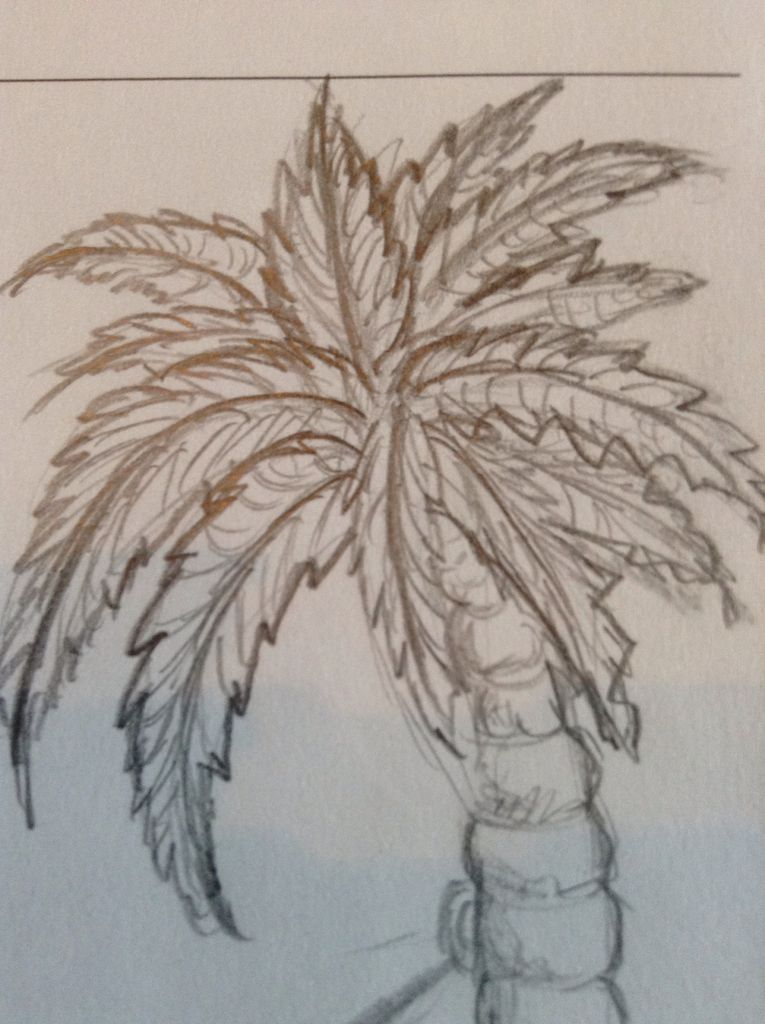 765x1024 How To Draw A Palm Tree 6 Steps