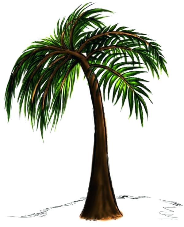 600x741 Palm Trees Drawings Palm Tree Drawing Steps Palm Tree Leaves