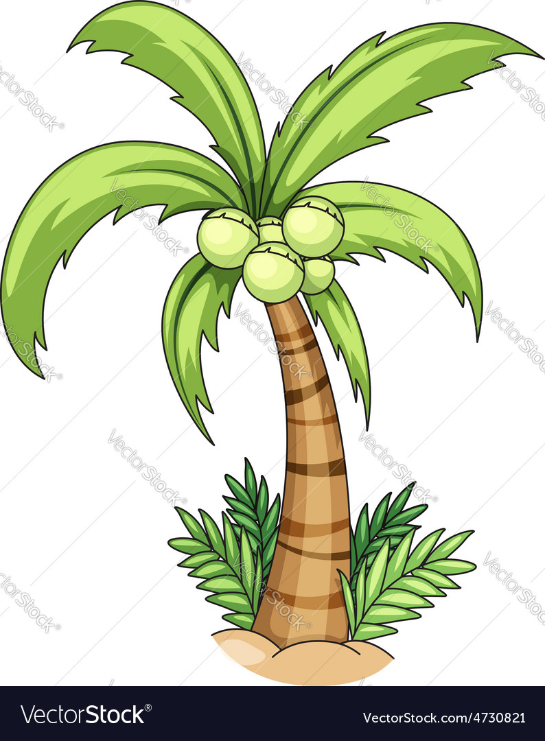 794x1080 Coconut Tree Drawing Coconut Tree Royalty Free Vector Image