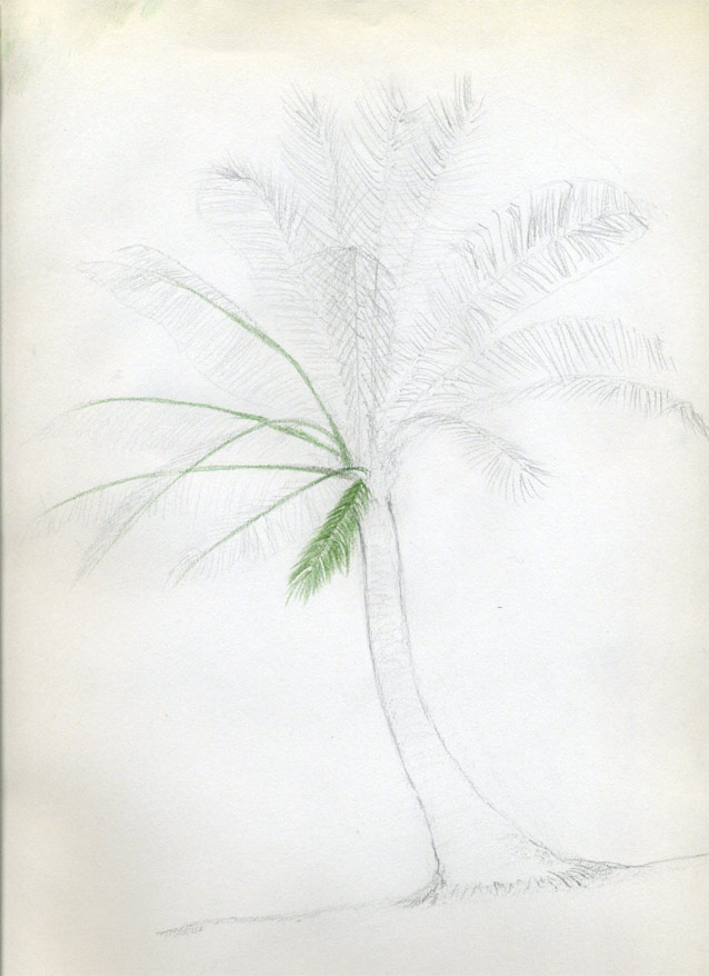 638x878 How To Draw Palm Trees