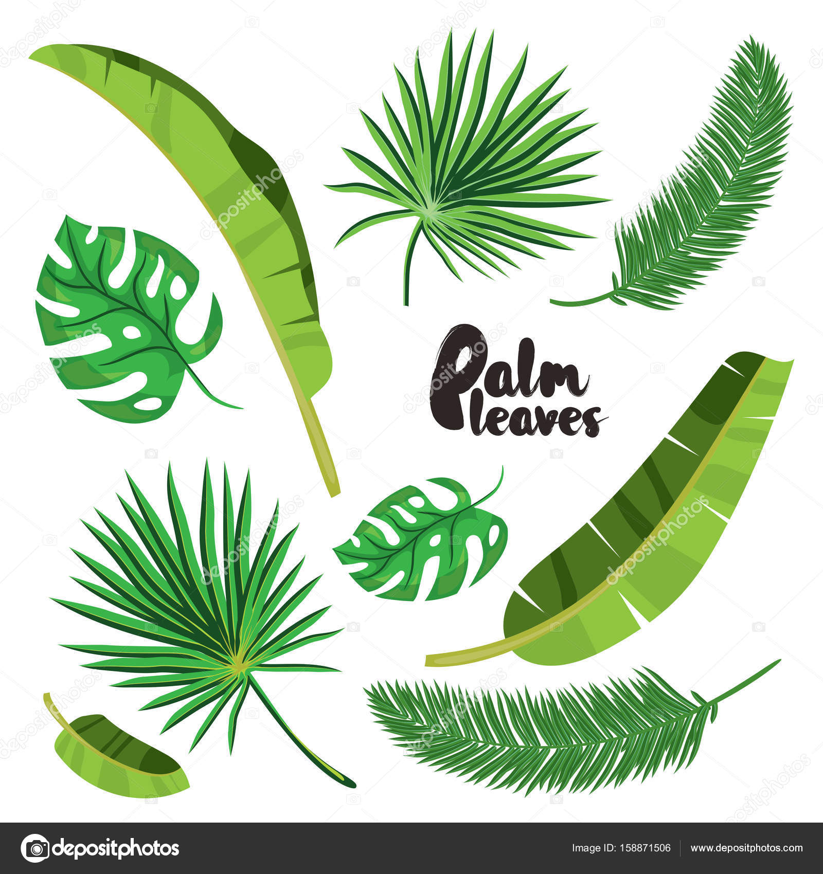1600x1700 Cartoon Tropical Palm Leaves Set. Vector Illustrated On White