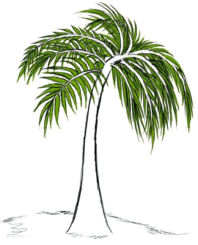 680x840 Drawing A Palm Tree Palm Trees Drawing Set Drawing A Palm Tree
