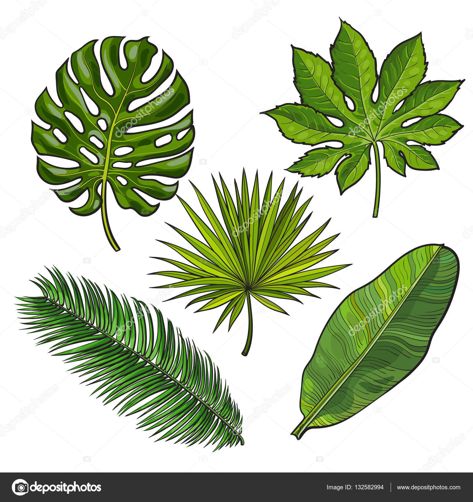 1600x1700 Set Of Tropical Palm Leaves, Sketch Style Vector Illustration