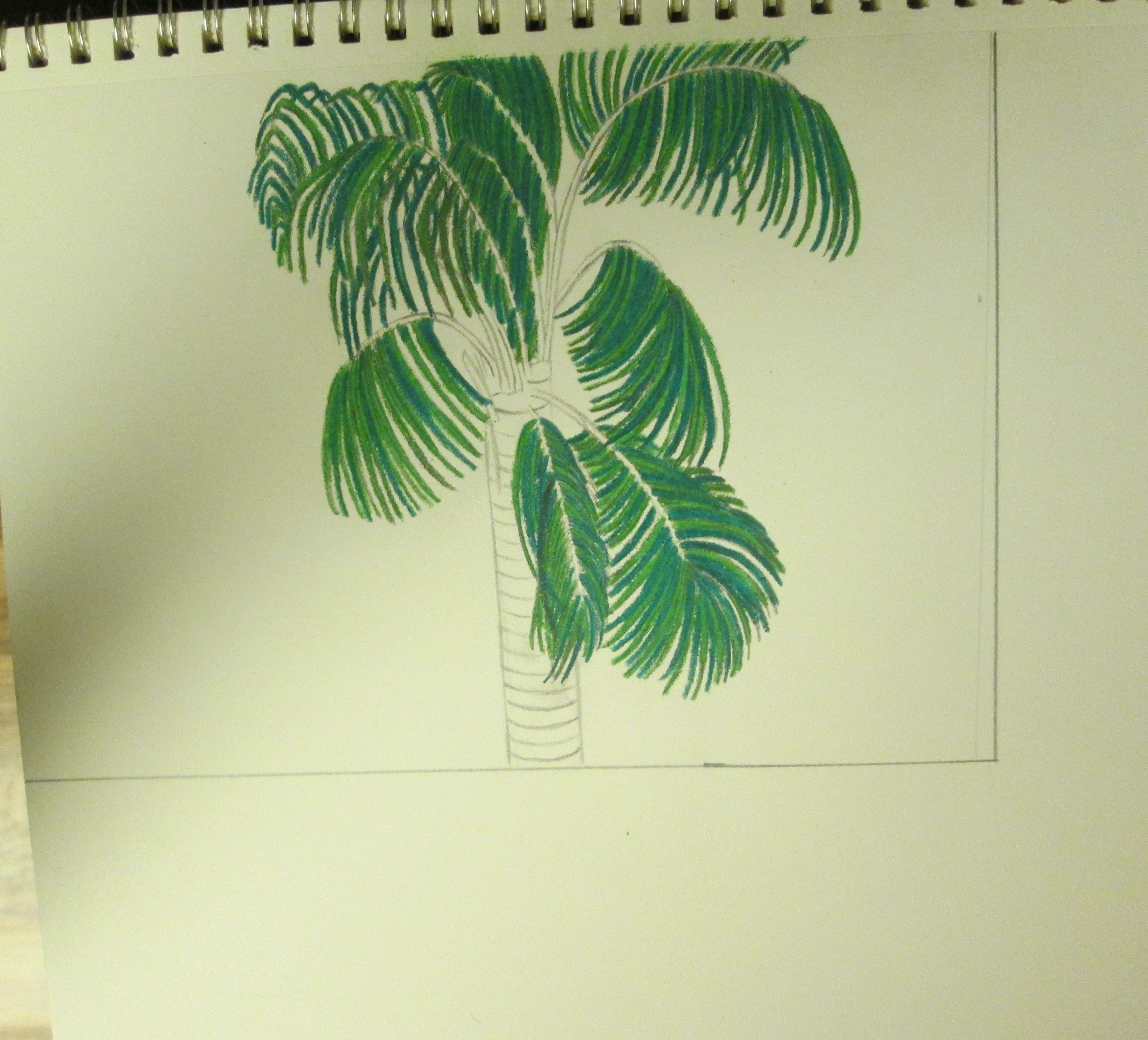 3812x3453 Drawing A Palm Tree With Colored Pencils Sweetbearies Art Projects