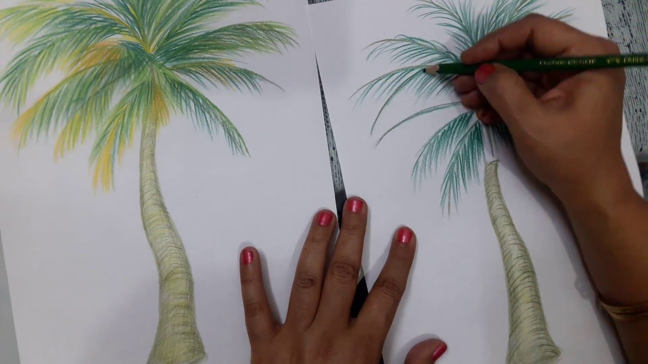1280x720 How To Draw A Coconut Tree