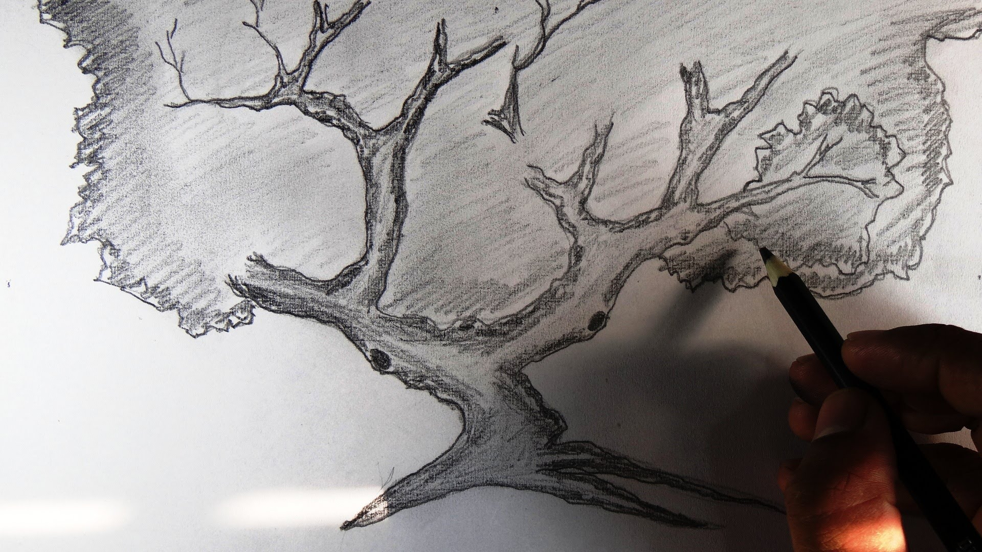 1920x1080 Pencil Sketch Of Neem Tree How To Draw A Palm Tree In Pencil