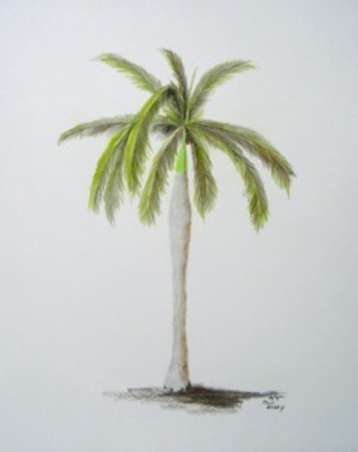 507x640 Ron Berry Artwork Royal Palm 2 Original Drawing Pencil Beach Art
