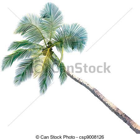 450x452 Drawn Palm Tree Color