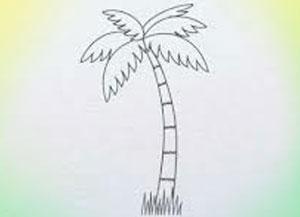 300x217 Easy Palm Tree Drawing
