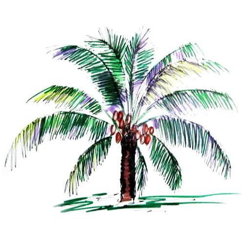 495x495 How To Draw A Coconut Palm Tree