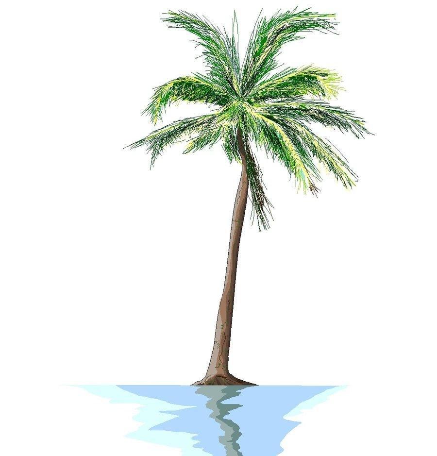 900x939 Palm Tree Drawing Tumblr