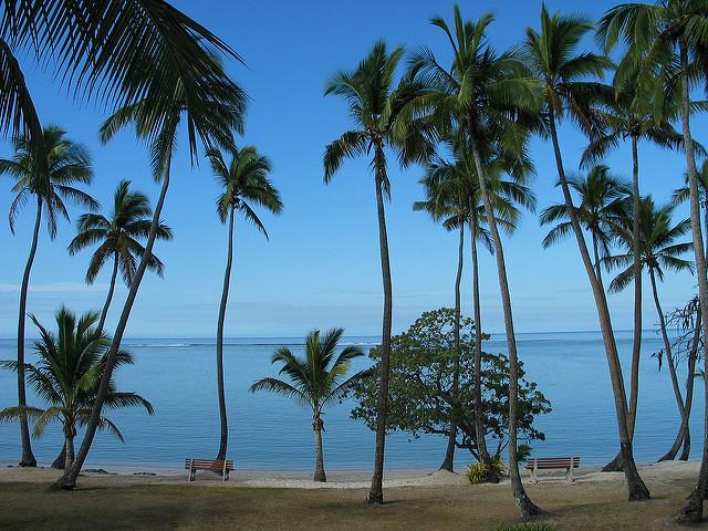 640x480 Palm Trees