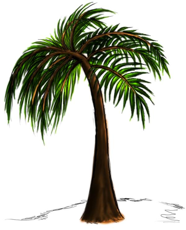600x741 Palm Tree Drawing Steps Pictures Reference