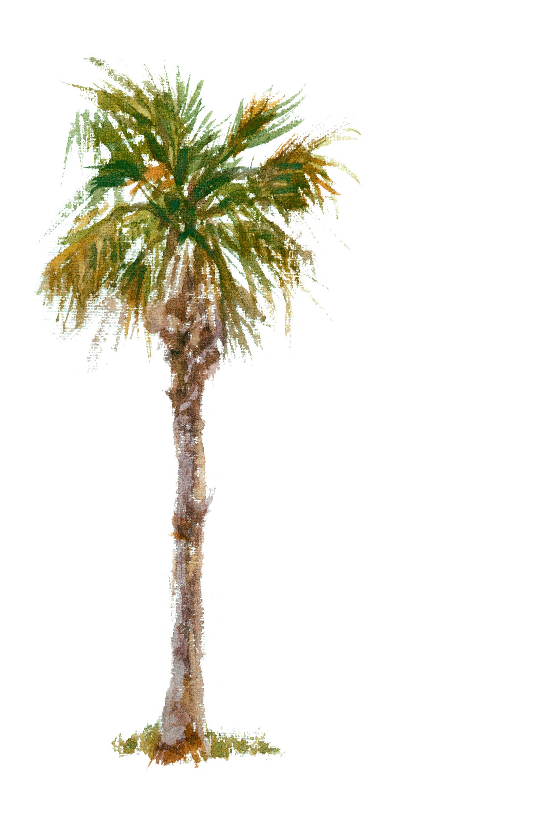 1935x2902 Palm Tree Drawing Ideas Best Jeans Ideas