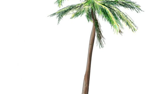 570x320 Palm Tree Drawing Palm Tree Drawing Clipartsco