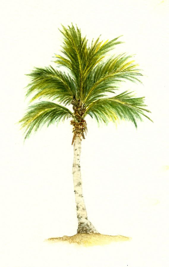 569x900 A Palm Tree Drawing Palm Tree Number 3 Painting Images