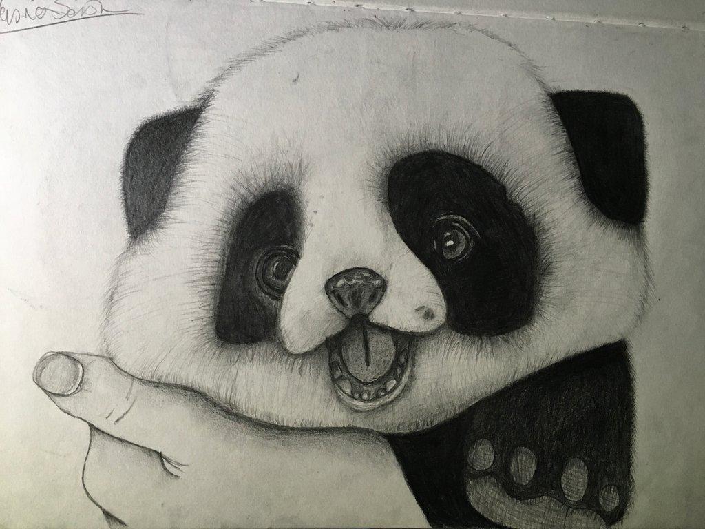 1024x768 Baby Panda Drawing By Pixel202