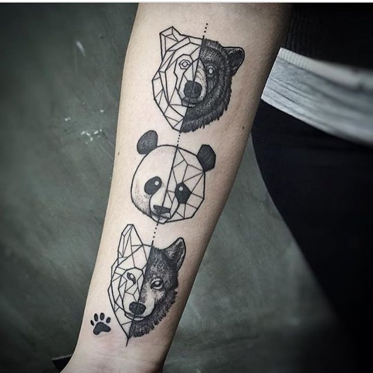 736x736 Collection Of Scratching Panda Tattoo