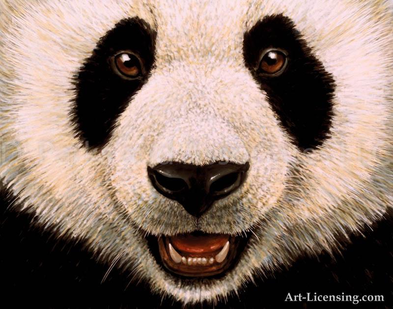800x629 Panda Face Drawing In Pencil