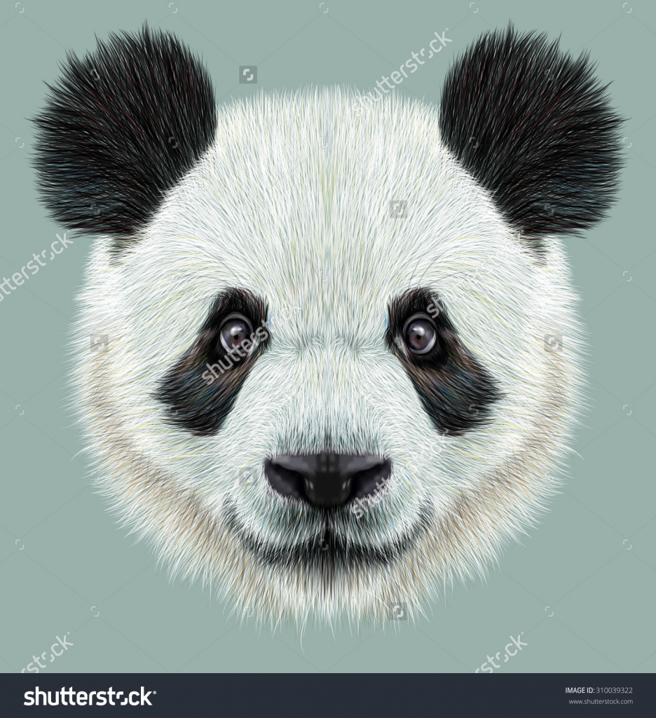 936x1024 Panda Face Drawing Panda Face Drawing Illustrative Portrait