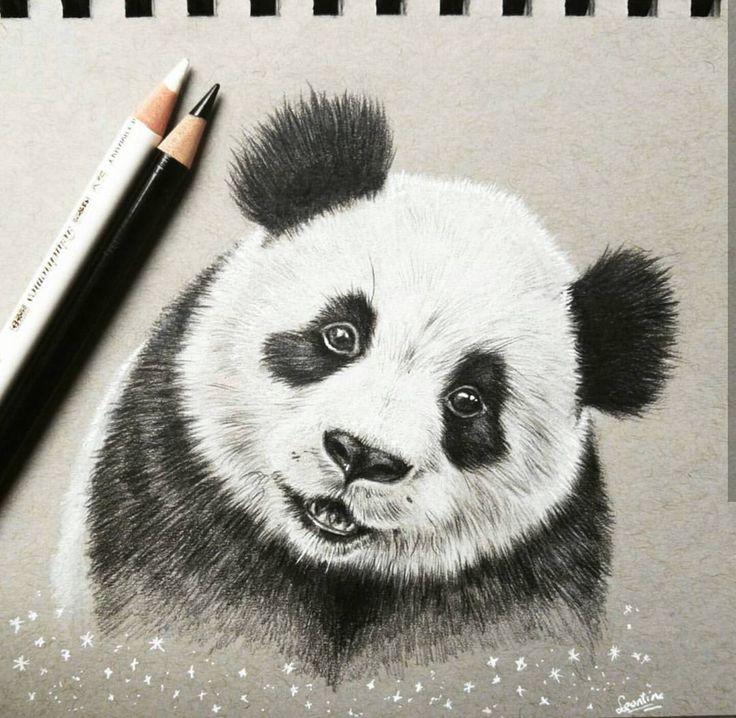 736x718 442 Best Pandas Images On Panda Bears, Panda And Pandas