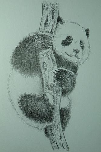 333x500 Baby Panda Pencil Drawing