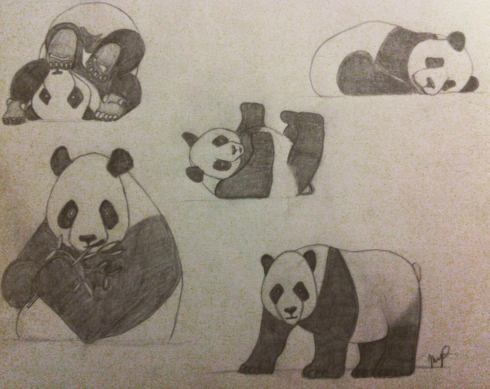 1003x796 Panda Collection Pencil Drawing By Insaniejanie808
