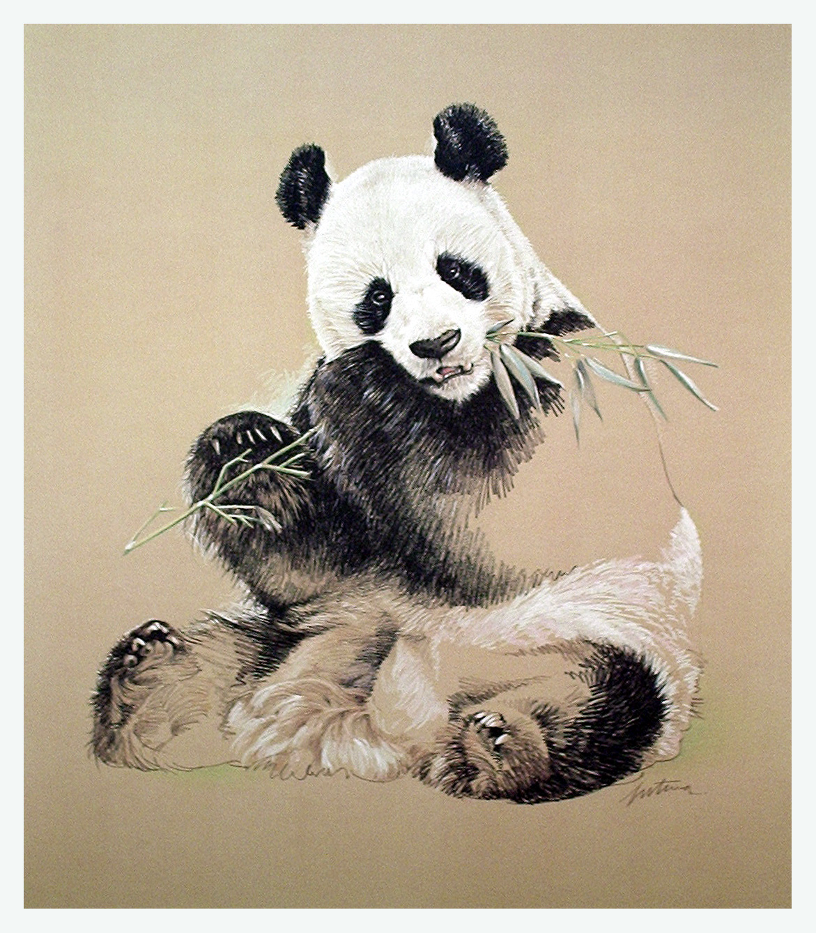 1171x1338 Panda Drawing Panda Panda Drawing, Panda And Drawings